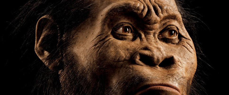 """A reconstruction of Homo naledi's head by paleoartist John Gurche, who spent some 700 hours recreating the head from bone scans. The find was announced by the Universityof the Witwatersrand, the National Geographic Society and the South African National Research Foundation and published in the journal eLife. Photo by Mark Thiessen/National Geographic PERMITTED USE:These images may be downloaded or are otherwise provided at no charge for one-time use for media/news coverage or promotion of the National Geographic Society'sH. nalediannouncement and exclusively in conjunction thereof. Copying, distribution, archiving, sublicensingsale, or resale of the images are prohibited. DEFAULT:Failure to comply with the prohibitions and requirements set forth above will obligate the individual or entity receiving these images to pay a fee determined by the National Geographic Society. Mandatory usage requirements for National Geographic magazine photos 1-10: Please note: Amaximum of5images total may be usedonline A maximum of5 images total may be usedon air A maximum of3 images total may be used inprint ONLINE: 1. Include mandatory photo credit with each image 2. Must show the October cover of National Geographic magazine somewhere in the piece if using two (2) or more images 3. Provide a prominent link tohttp://natgeo.org/naledi 4. Mention that the images are from """"the October issue of National Geographic magazine"""" BROADCAST: 1. Include mandatory photo credit with each image 2. Show the October cover of National Geographic magazine at some point during the segment 3. Provide a verbal mention of """"the October issue of National Geographic magazine"""" PRINT:1. Include mandatory photo credit with each image2. Must show the October cover of National Geographic magazine somewhere in the piece if using two (2) or more images3. Mention that the images are from """"the October issue of National Geographic magazine""""*Contact Carol K"""