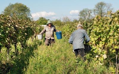 Stand die Wiege des Weinanbaus in Georgien?